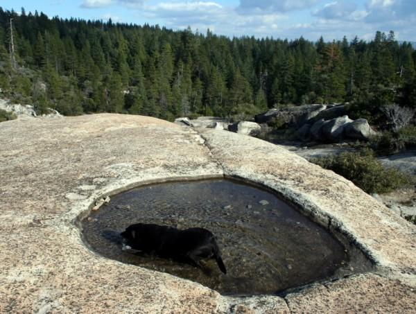 Water-dog-hole
