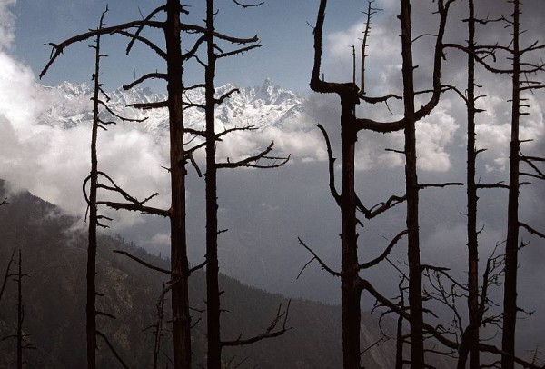 Burnt trees in the Khumbu