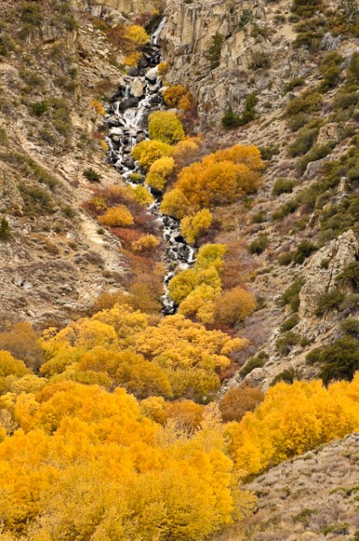 Alger Creek, Aspens and willows