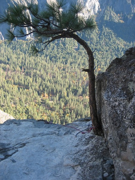 Top anchor of Western East Ledges Rappel route.