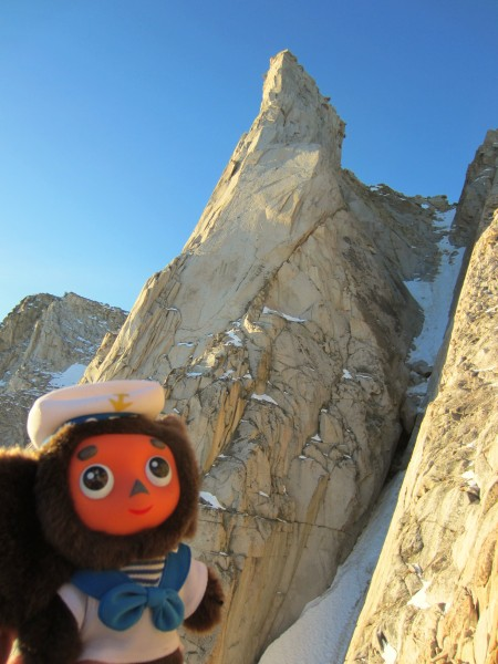 Cheburashka is impressed