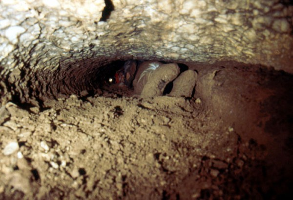 Do you like tight little holes way underground? New Mexico