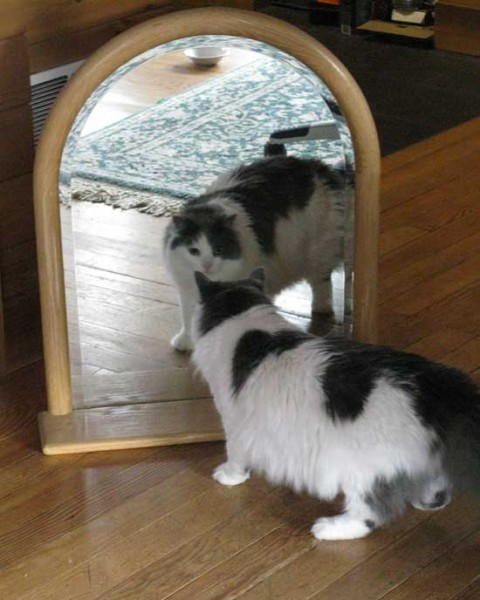 Baker don't quite know what to do about that cat in the mirror