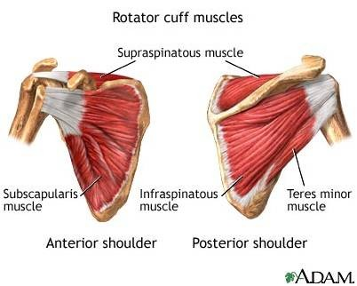 Anatomy of the shoulder :: SuperTopo Rock Climbing ...