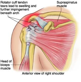 Anatomy Of The Shoulder Supertopo Rock Climbing