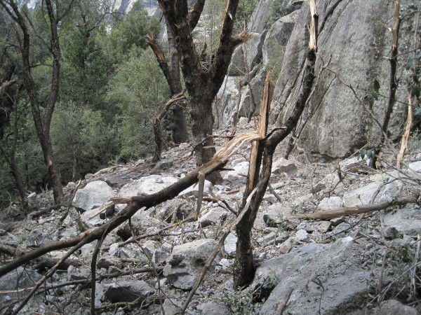 Fresh rock debris and tree damage just east of the Bishop's Terrace st...