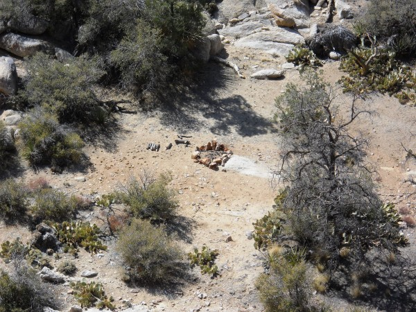 gathering vegetation for any reason is not allowed in joshua tree np. ...
