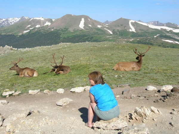 Contemplating the Elk on Trail Ridge Road.