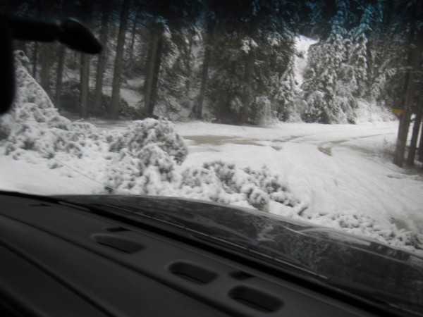 Downed tree blocking much of the road - drove over the top of it  - 4/...