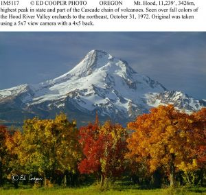 Mt.Hood, orchards, fall, OR, remake