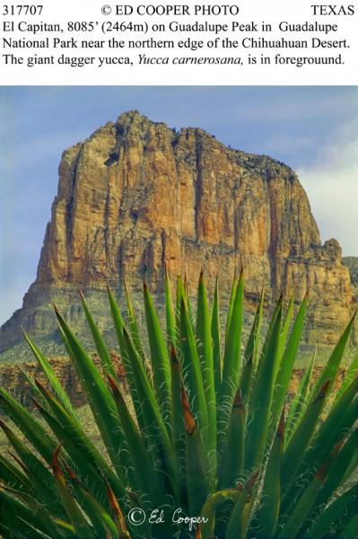 El Cap, yucca, Guadalupe NP, TX