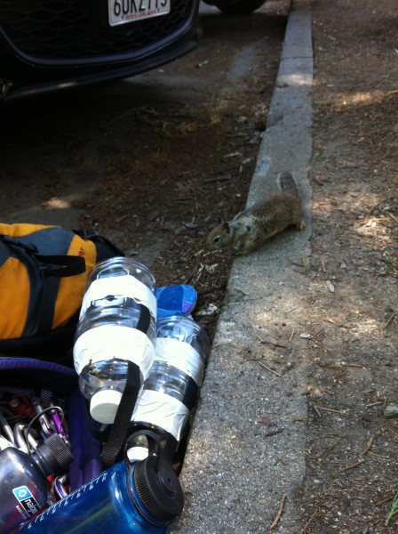 Mr. Squirrel says, YER GONNA DIE!!!