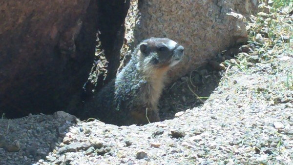 Ot Marmot says: Don't Feed The Trolls!!