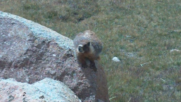 "Off Topic Marmot says, ""Dafuq happened to this topic?!"""