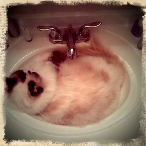 Dude, really. Lola lounging in the cool basin during the hot summer.