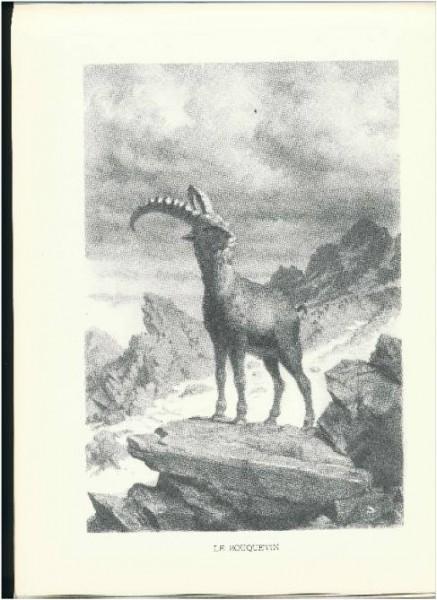 Le Bouquetin, Dans La Vallee D'Aoste, Album D'Un Alpiniste