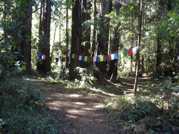 Up on top of the hill, a beautiful sacred grove with prayer flags.  It...