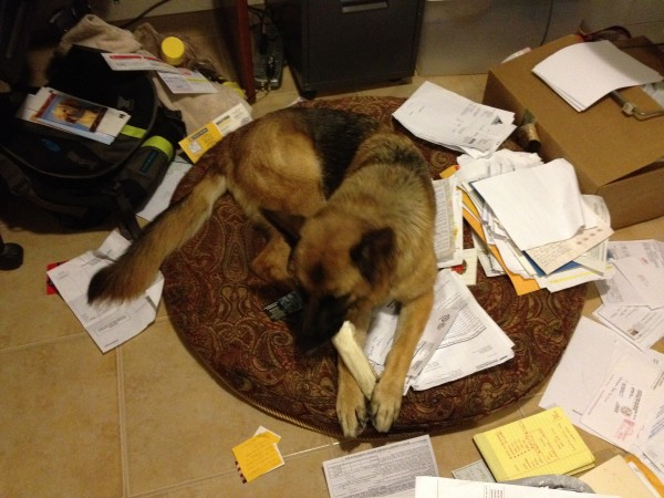 Loki helping us with the paperwork.