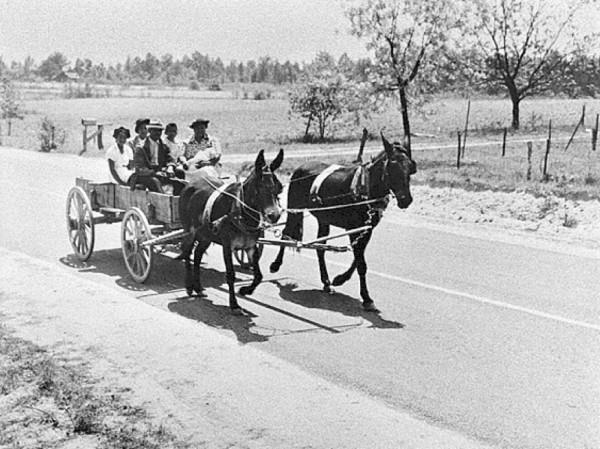 Family mule 1941