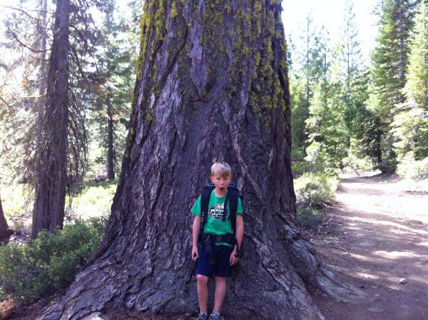 Good size tree for what did not seem to be old growth