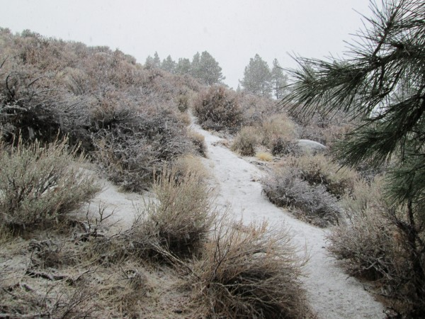 2 dec 2012, East side, Tahoe Rim Trail