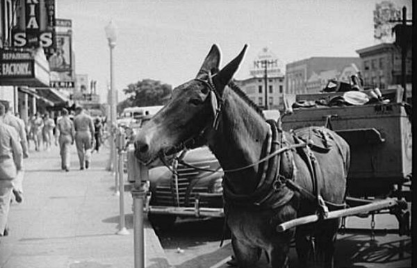 Mule on Broadway, soldiers are on weekend leave from Ft. Benning.