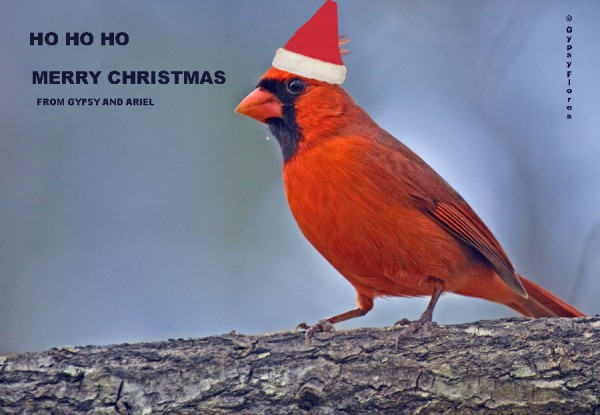 SANTA CARDINAL SENDS A SPECIAL MESSAGE FROM US