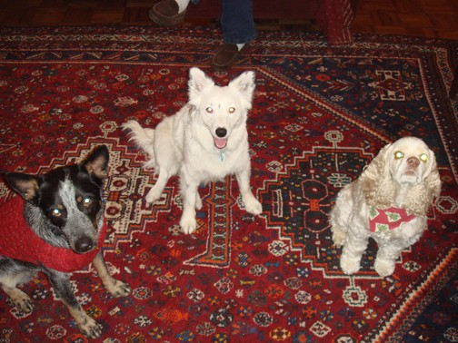 Christmas time... good girls sitting nicely on a crazy carpet.