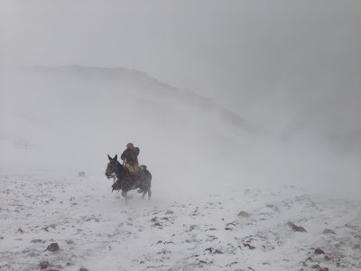 Our mule packing out from base camp - photo courtesy of Tony