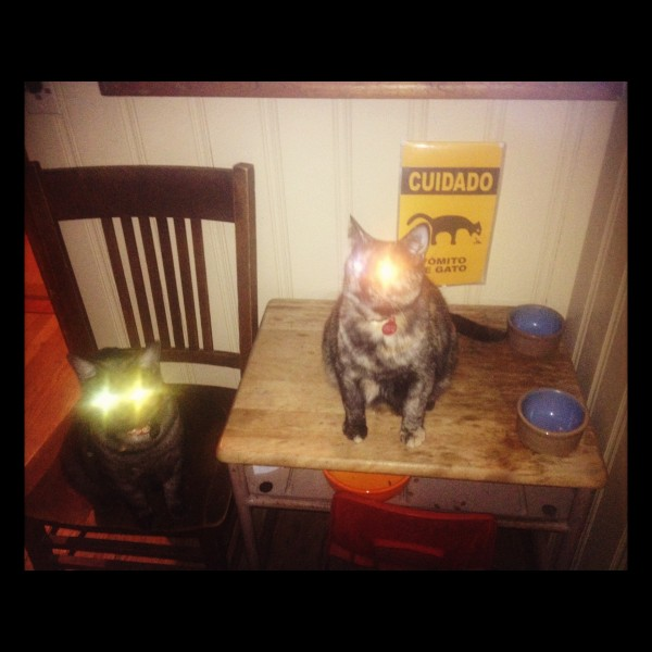 Evil kitties