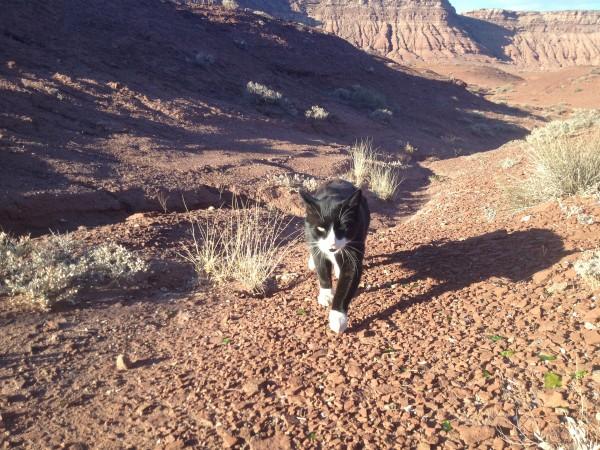 Sylvester loves desert camping.