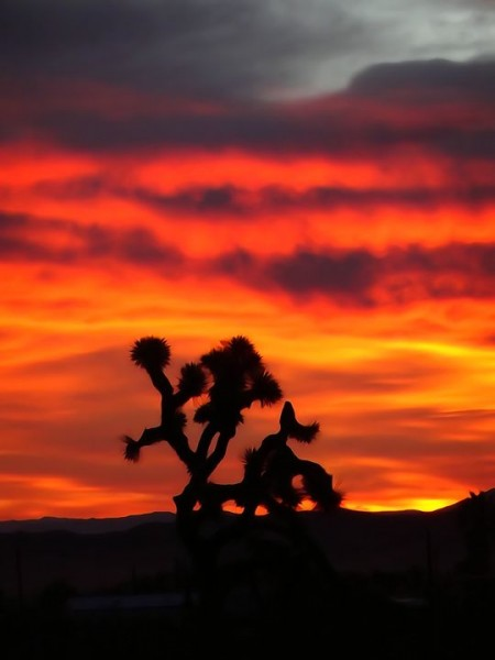 Sunrise in Joshua Tree yesterday.
