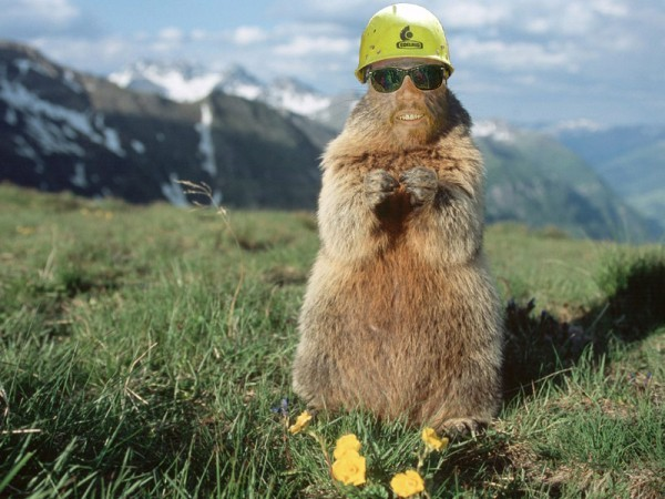 Travis as Off Topic Marmot