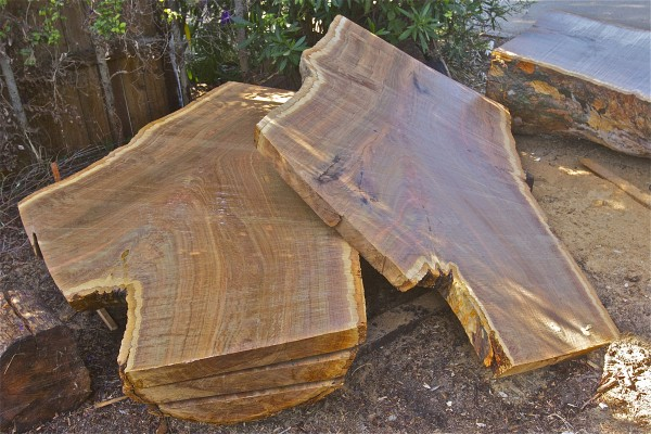 Alaskan milled Eucalyptus Cladocalyx nugget - 6' long, 3' to 5' wide 4...