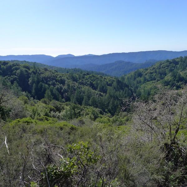 The Santa Cruz Mt's.