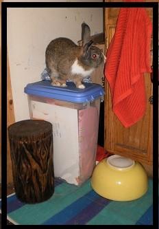 simply funny, he's a climber...
