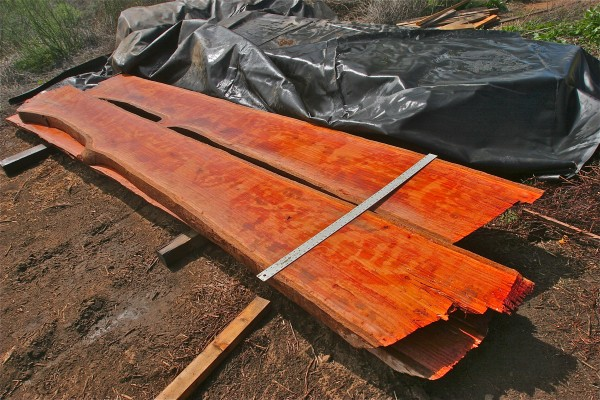 16 ft Red Gum slabs