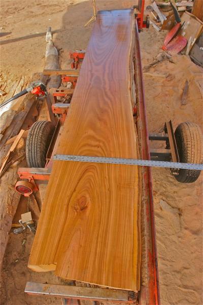 That's a 4ft measuring stick on some fresh cut San Diego Sugar Gum