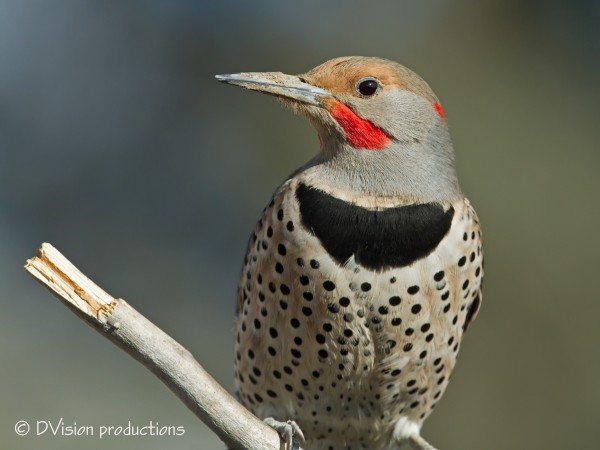We never tire of our entertaining Flicker visitors - who designed that...