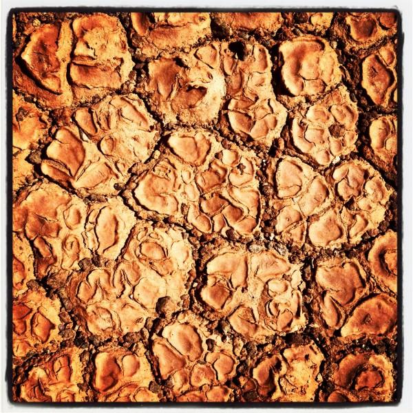 Dirt flowers