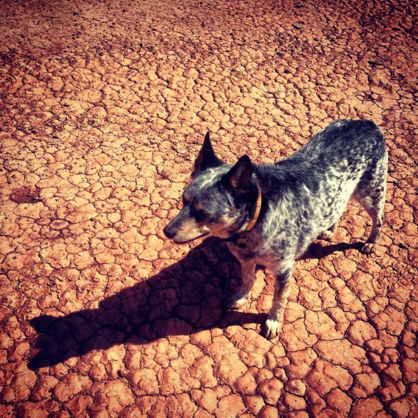 Desert doggie