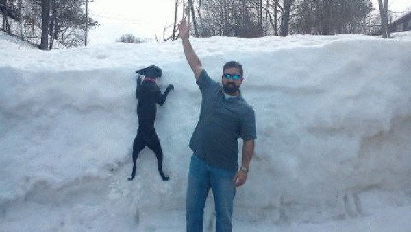 New Mexico canine ice climbing...very popular