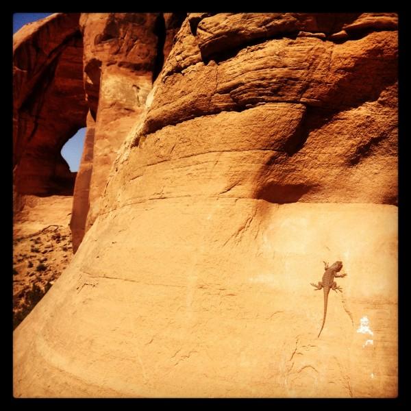 Lazy Lizard on Looking Glass Rock.