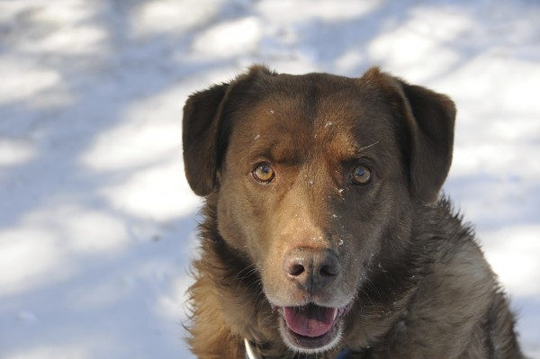 Bo, he was a great friend & good dog.