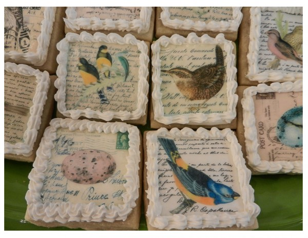 cookies from the afternoon Birdscape talk