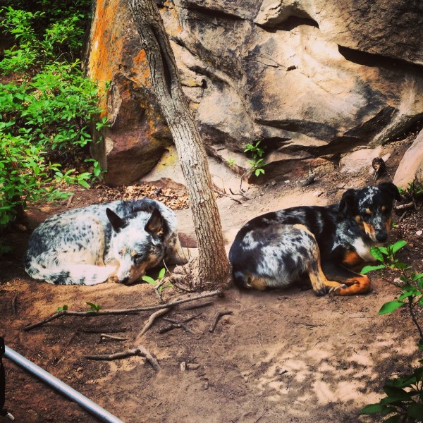 Crag dogs