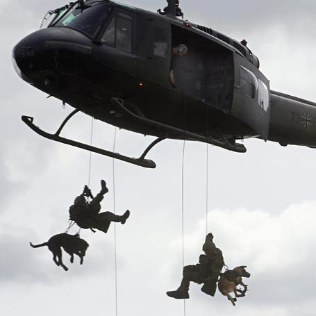 Helicopter dogs.
