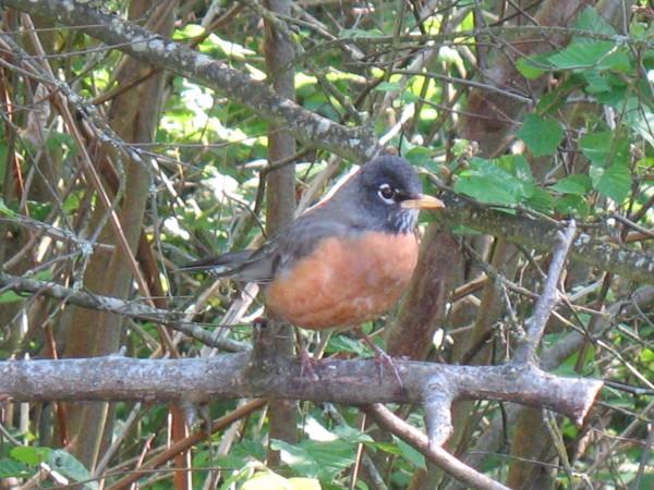 Seemed awfully fierce for a robin