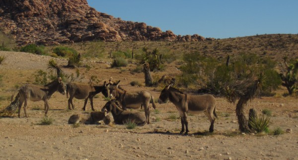 Fauna: wild burros - $500 fine if you're caught feeding them. <br/>