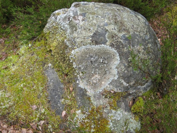 91.1 Lichens: An indication of a sound environment